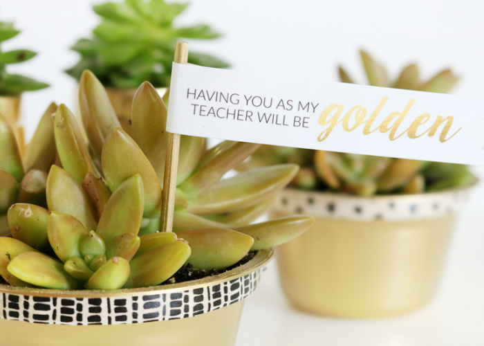 small succulents in gold container