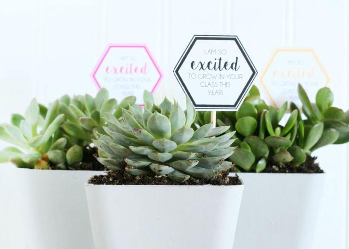 succulents in white pots