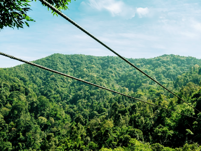 two ziplines over the forest